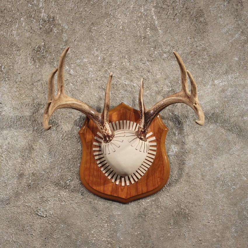 Whitetail Deer Antler Taxidermy Plaque For Sale