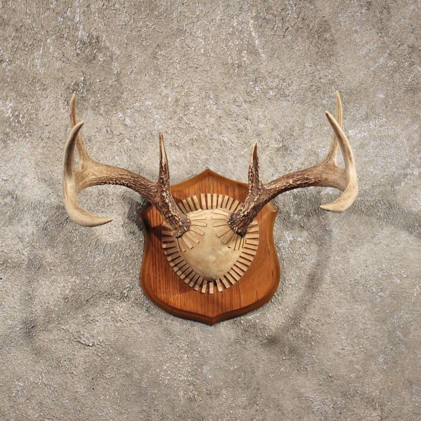 Home 187 horns antlers skulls 187 whitetail deer antler plaque