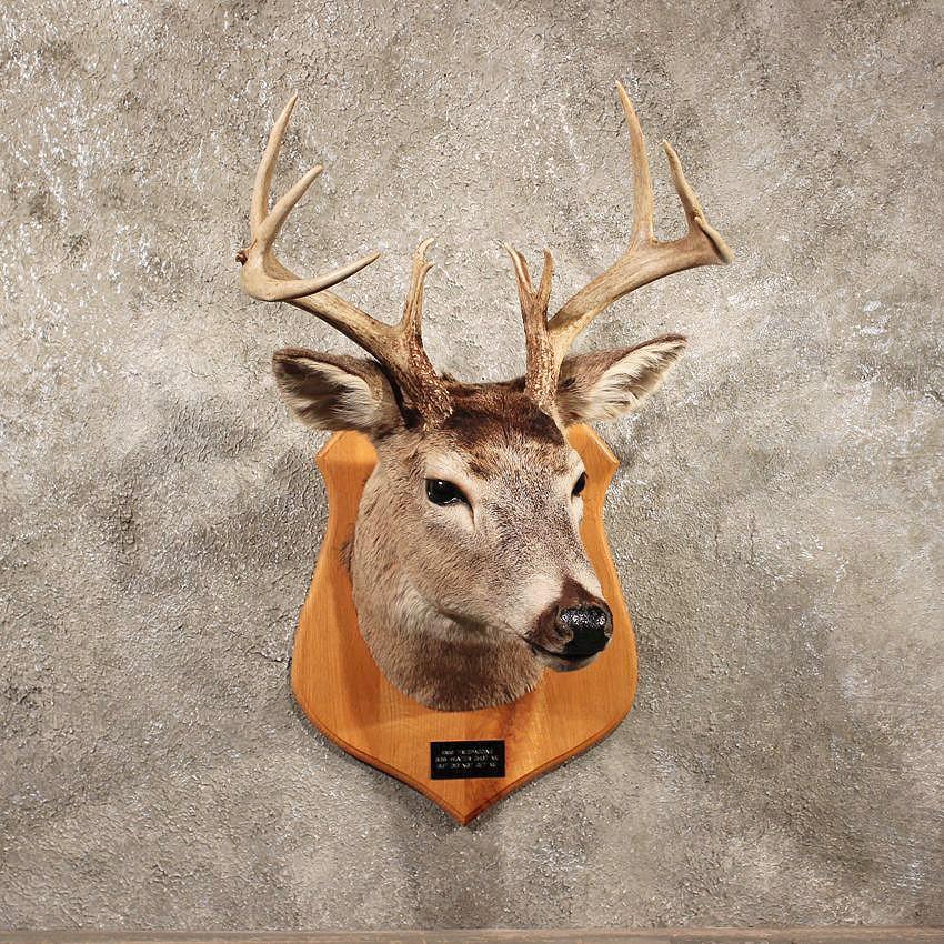 Deer Head Mount >> Vintage Whitetail Deer Mount 11049 The Taxidermy Store