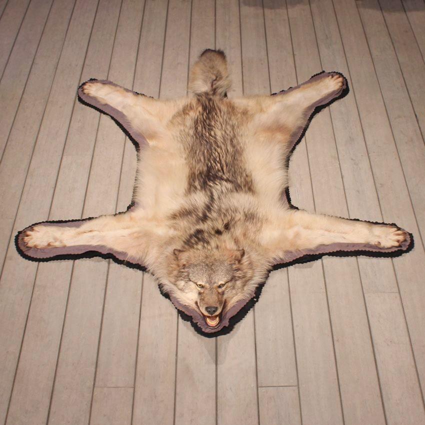 Grey Wolf Taxidermy Rug 11160 The Taxidermy Store