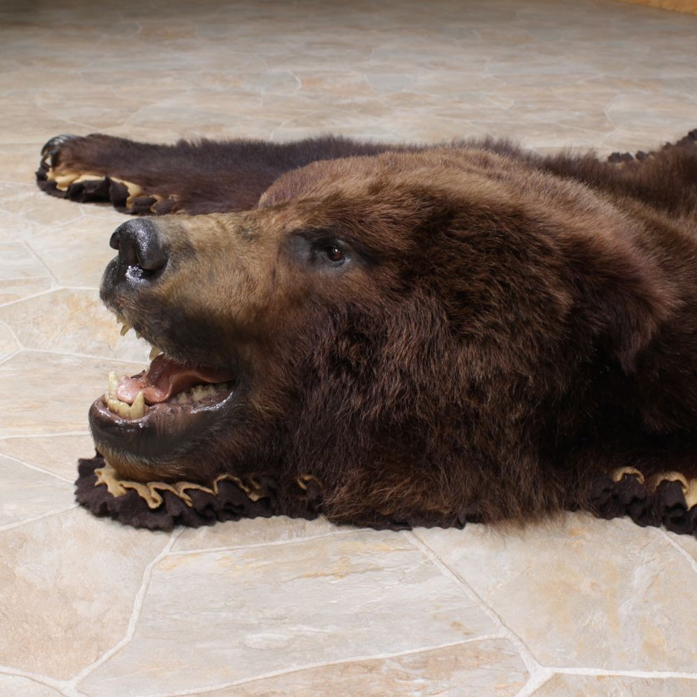 Brown Bear Taxidermy Rug With Mounted Head 12343 For The