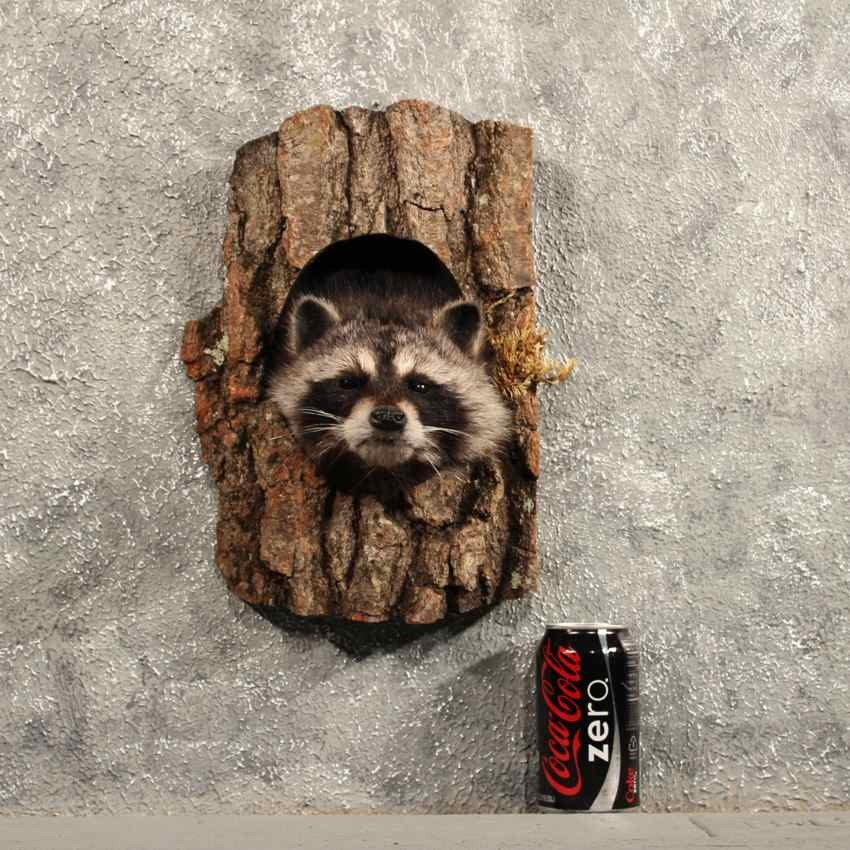 raccoon hispanic singles Full real estate market profile for raccoon,  homes include single family houses as well as  asian and hispanic residents may identify with one of the.