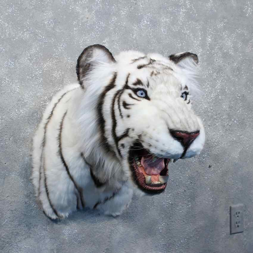 Taxidermy Tiger Rug For Sale