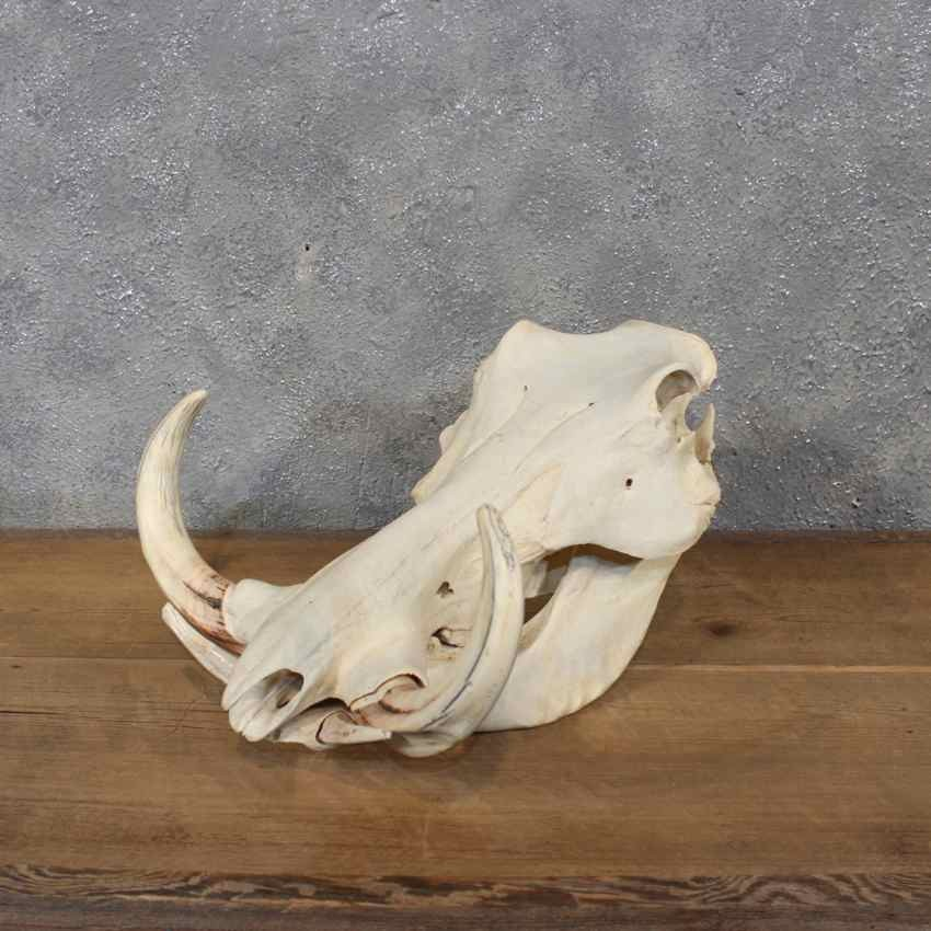 Warthog Skull | www.pixshark.com - Images Galleries With A ...