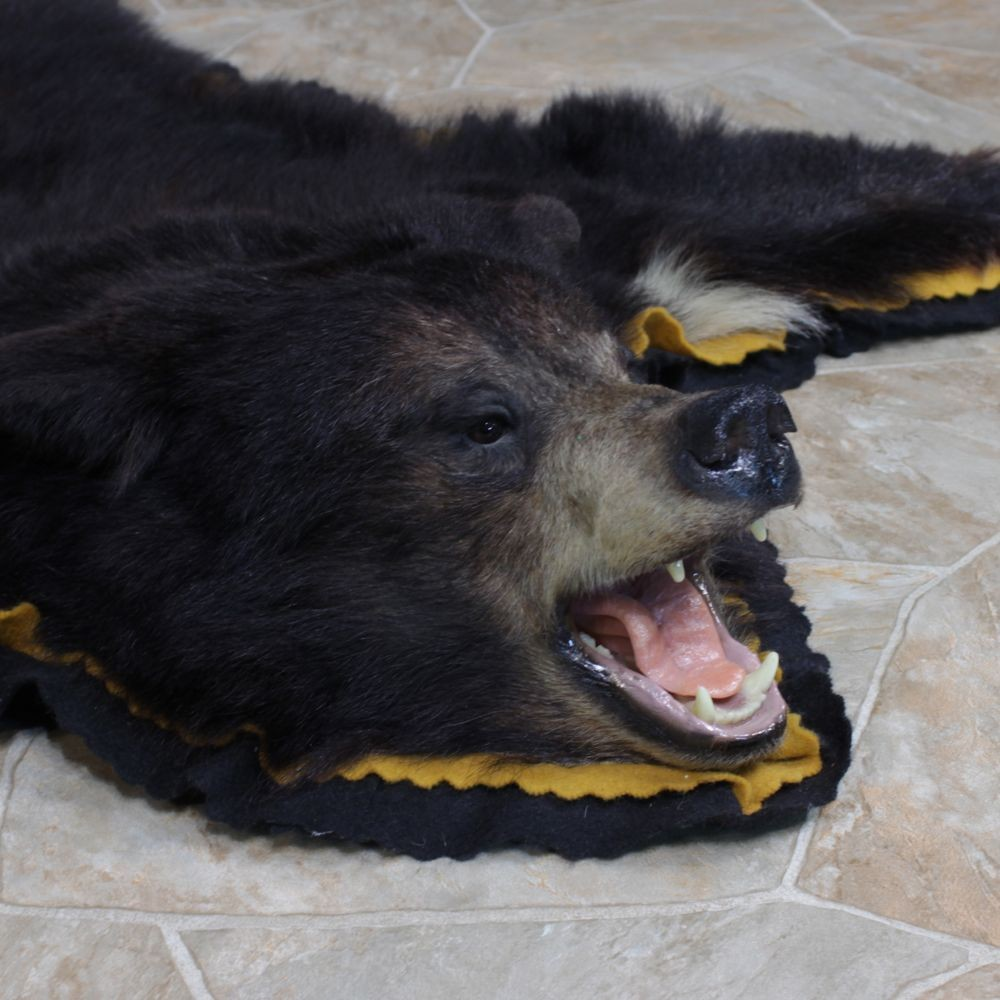 Black Bear Rug Mount 12340 The Taxidermy Store