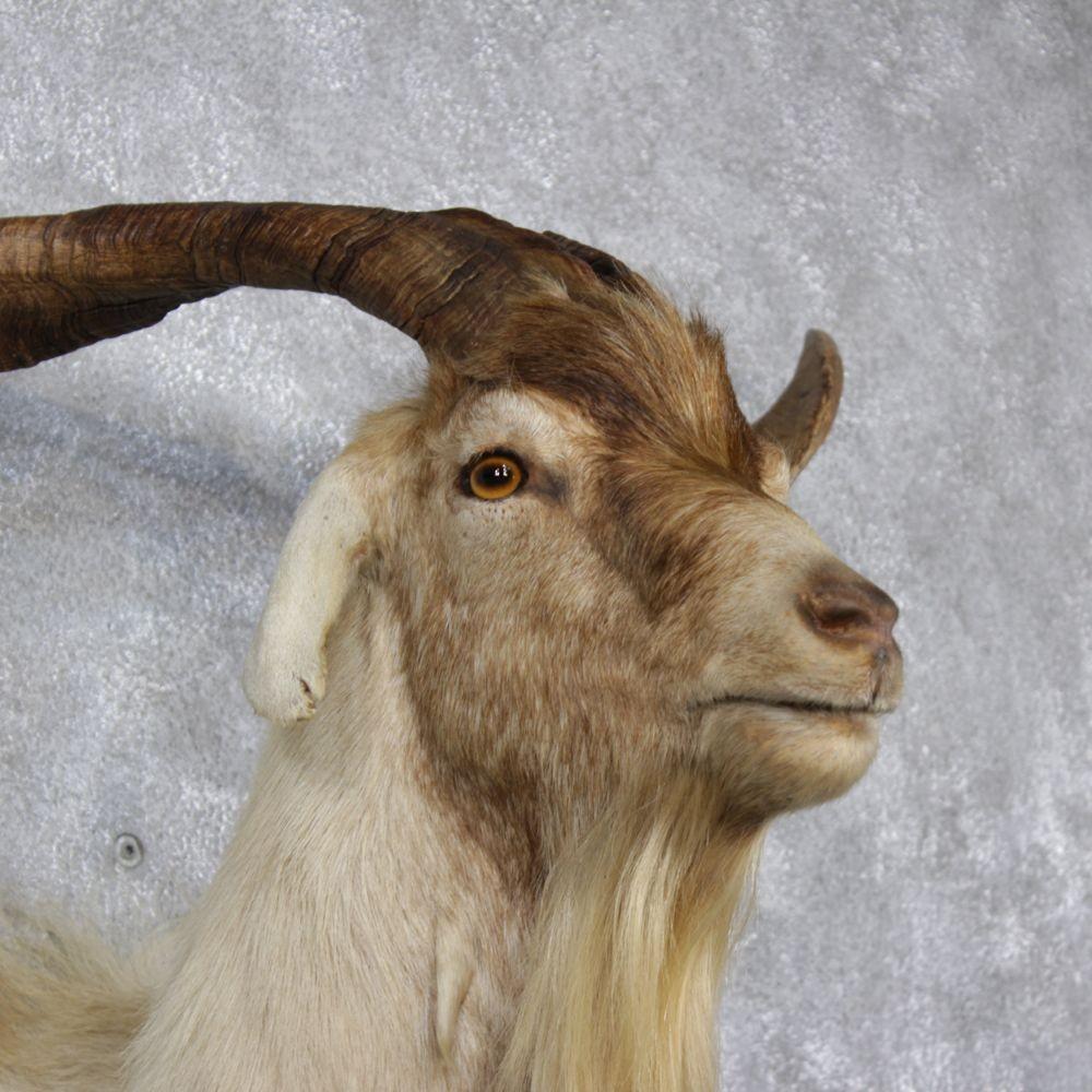 Goat Head In White Room