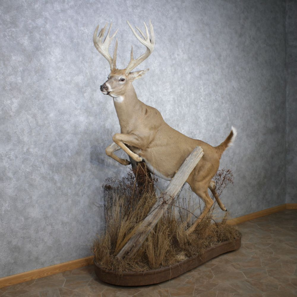 Whitetail Deer Mount For Sale #12510 - The Taxidermy Store