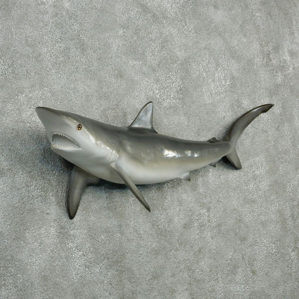 Blacktip Reef Shark Reproduction Mount For Sale #12596 - The