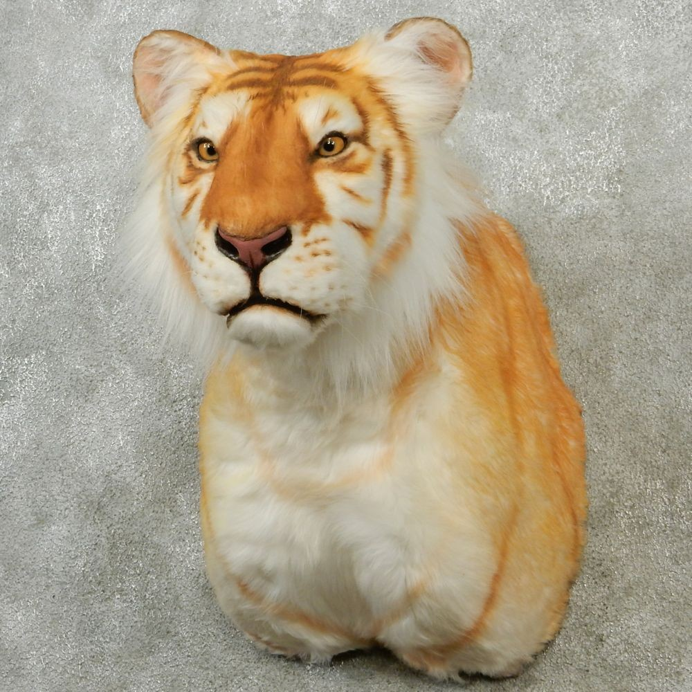 golden tiger mount