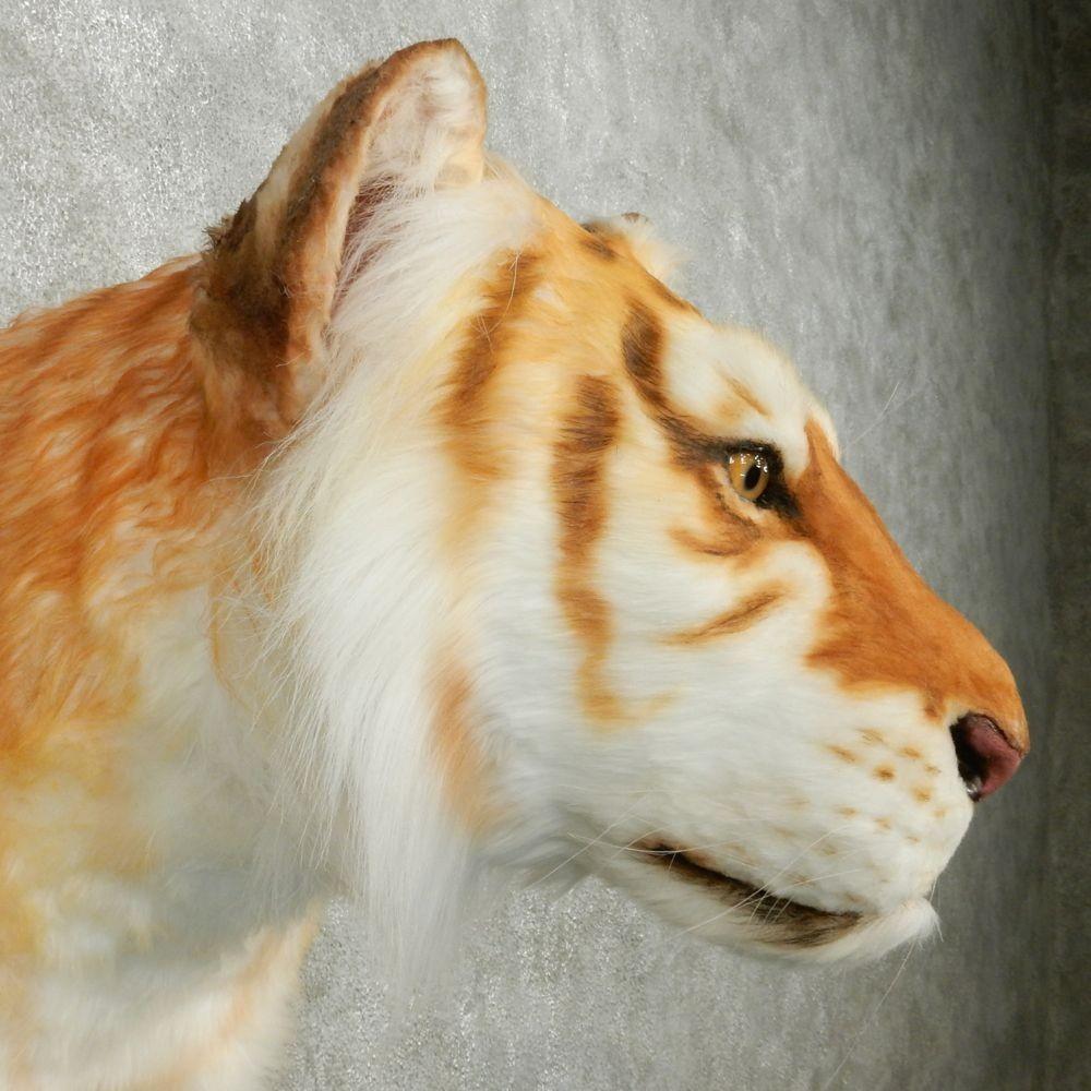golden tiger mount