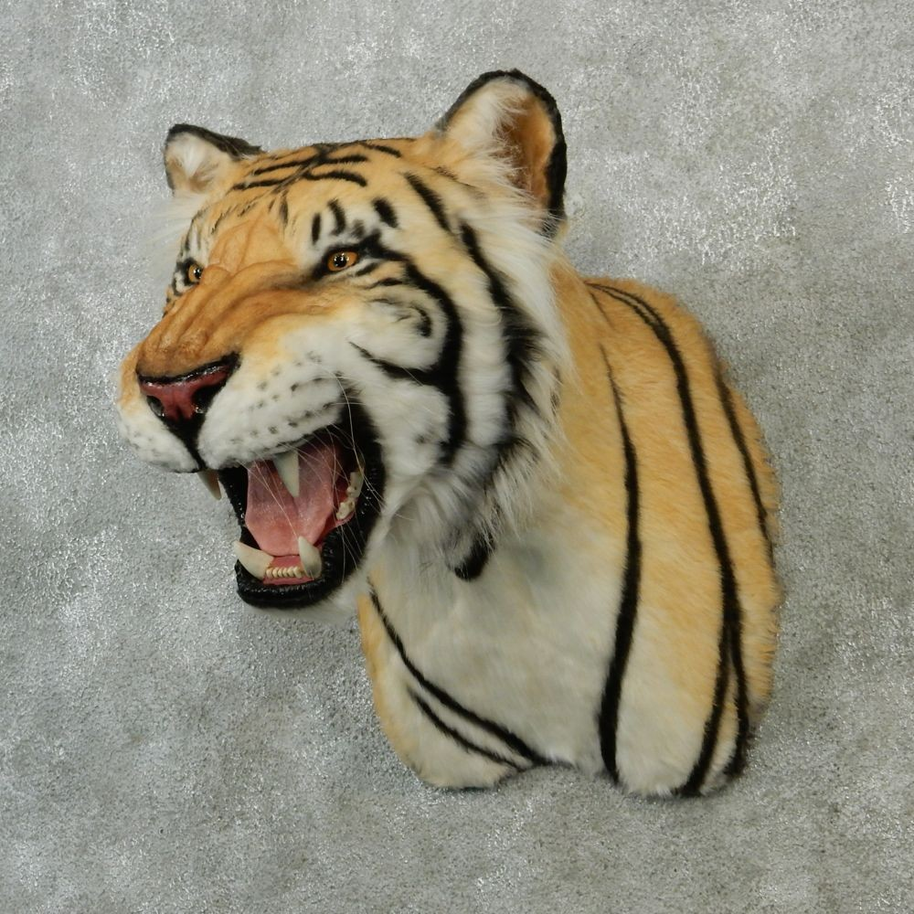 Taxidermy Tiger Rug For Sale: Reproduction Bengal Tiger Shoulder Mount #12900