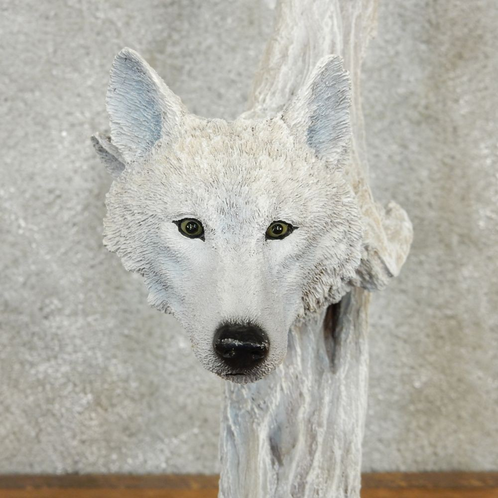 Gray wolf statue the taxidermy store