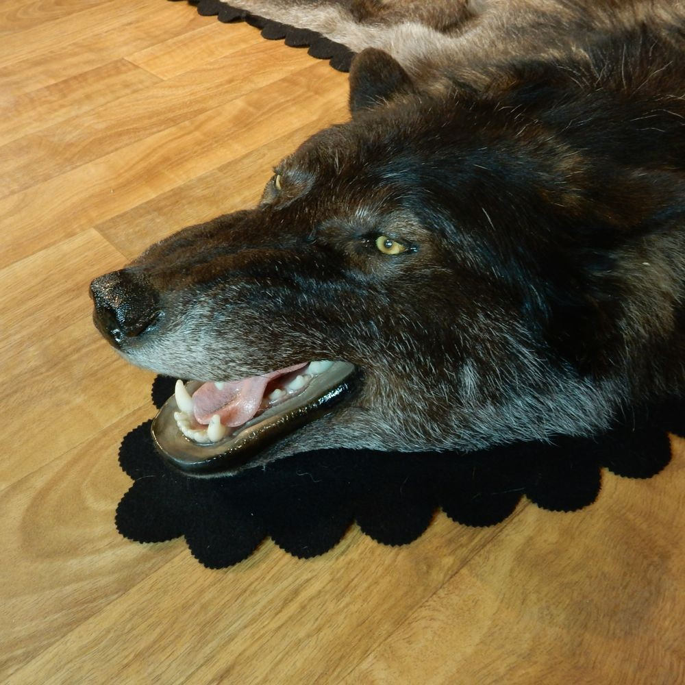 Black Wolf Taxidermy Rug #13006