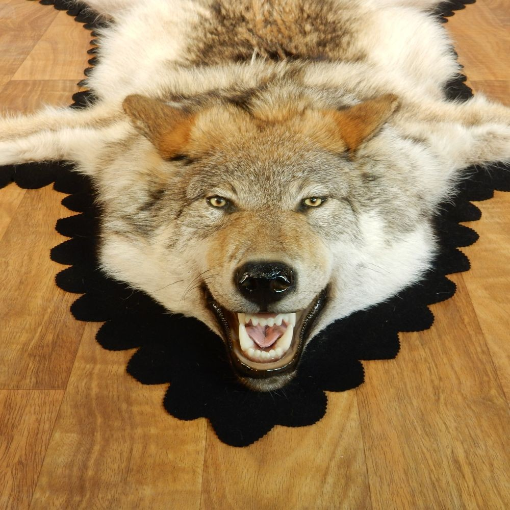 Gray Wolf Rug Taxidermy Mount #13008 For Sale @ The Taxidermy Store