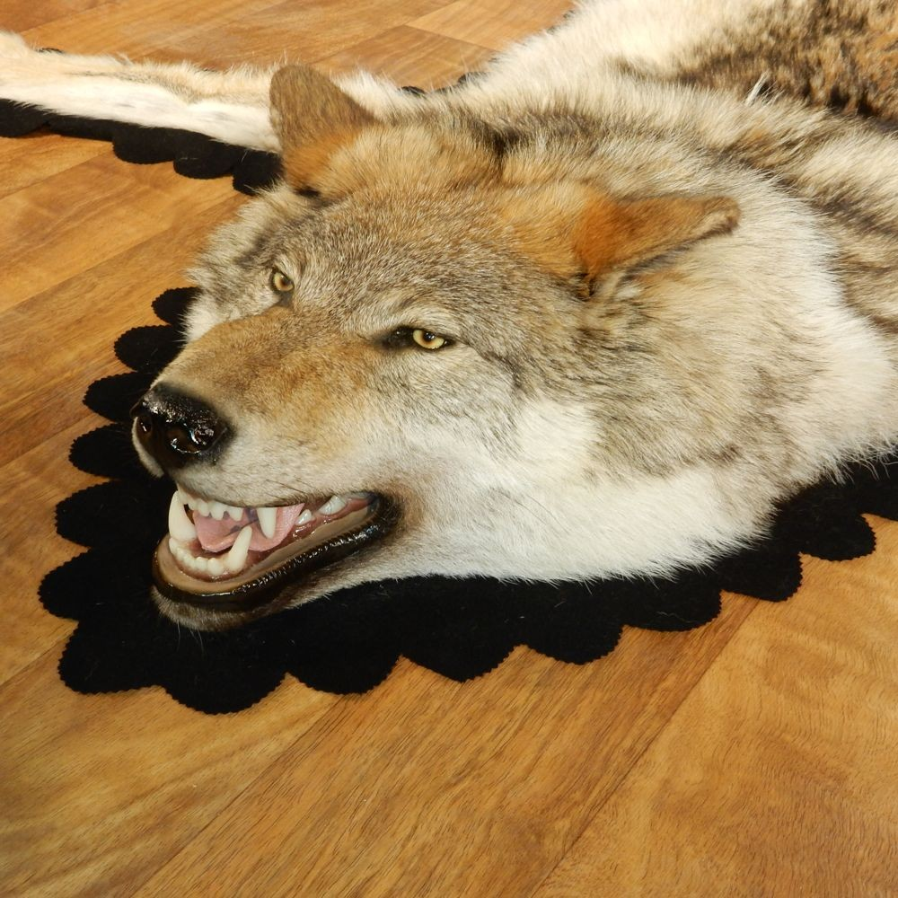 Amazing Gray Wolf Rug Taxidermy Mount #13008 For Sale @ The Taxidermy Store