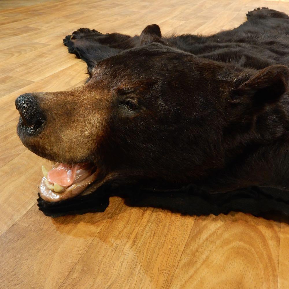 Black Bear Full Size Rug Mount #13381
