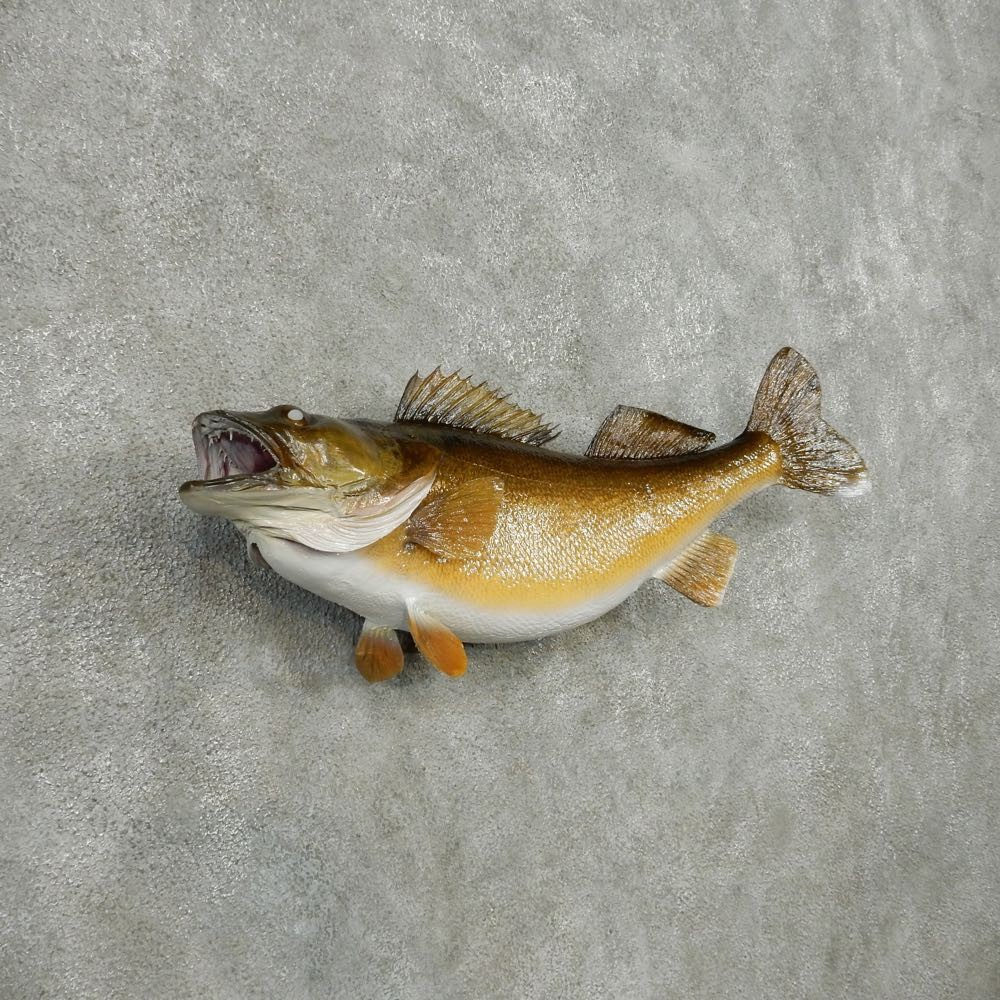 Walleye taxidermy fish mount 13502 the taxidermy store for How to taxidermy a fish