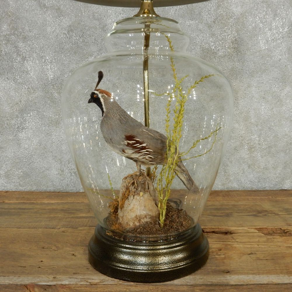 Quail Lamp Life-Size Taxidermy Bird Mount #13518 - The Taxidermy Store