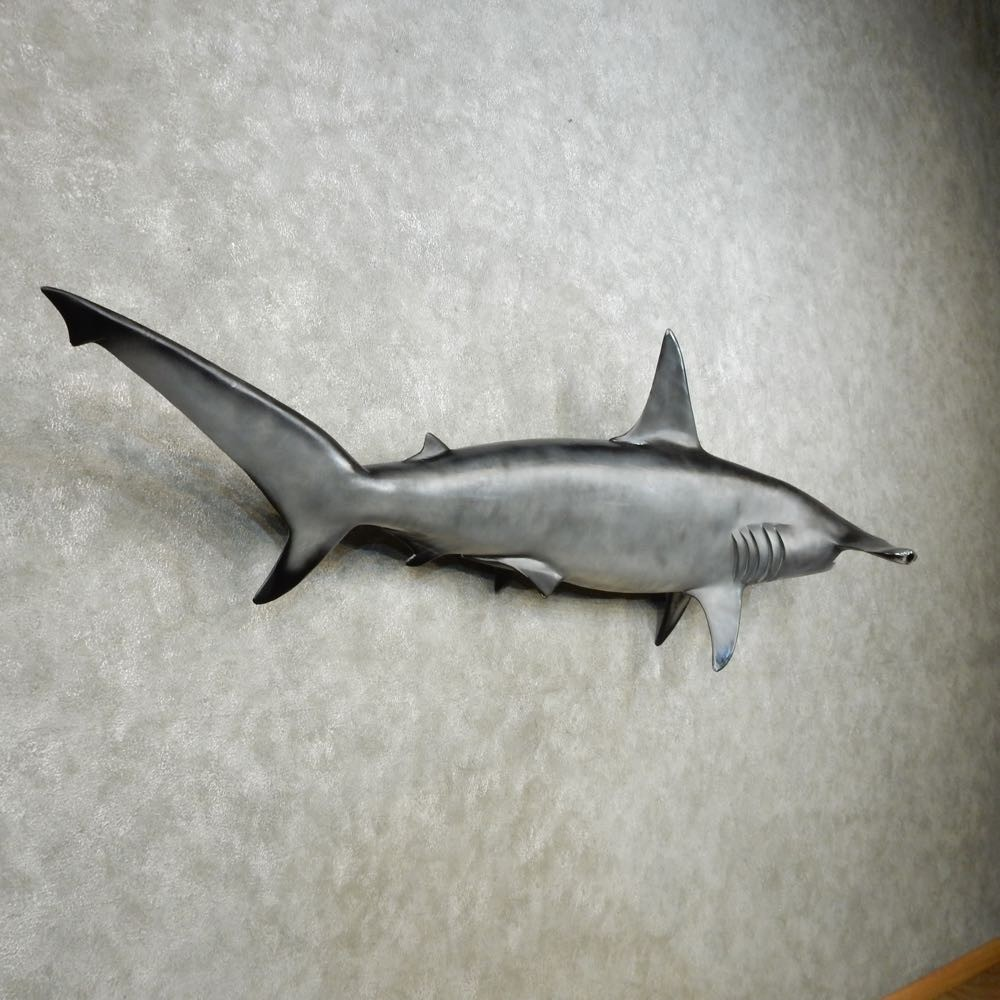 Hammerhead Shark Reproduction Mount For Sale #14365 - The