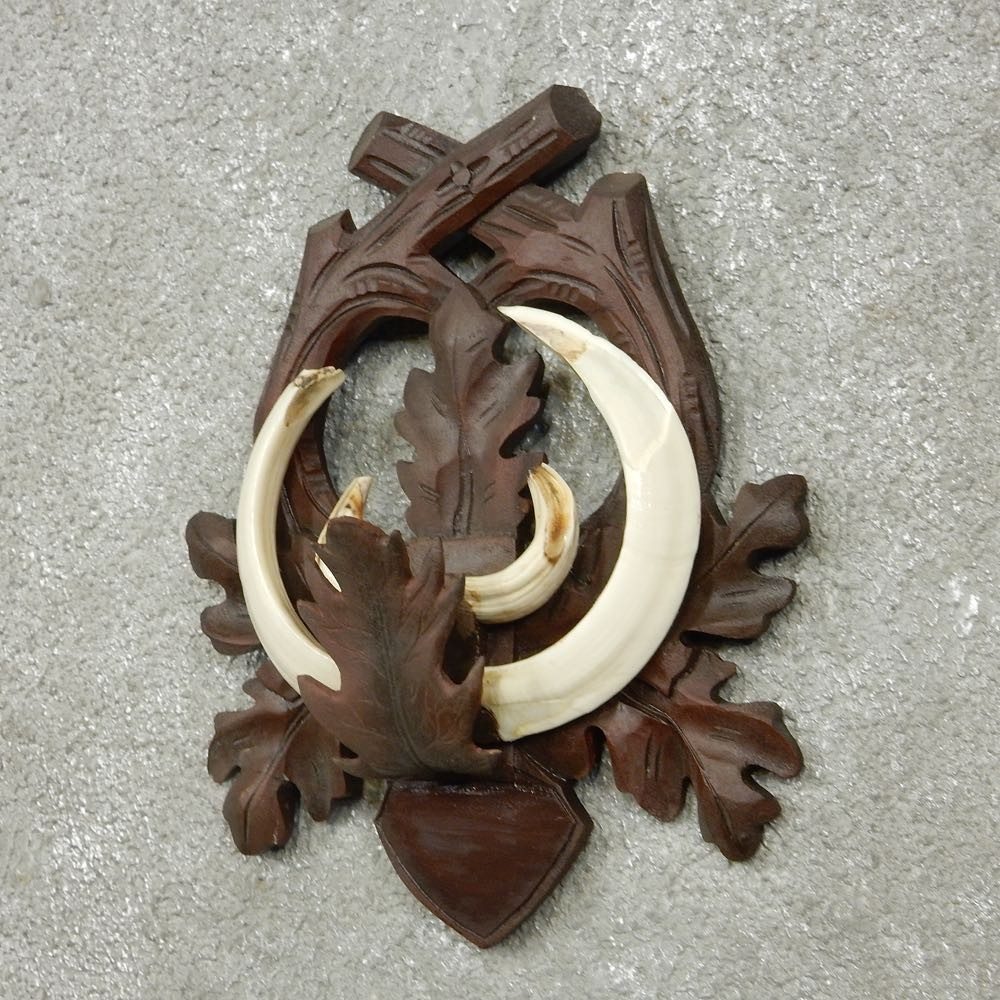 feral boar tusk plaque for sale 15166 the taxidermy store