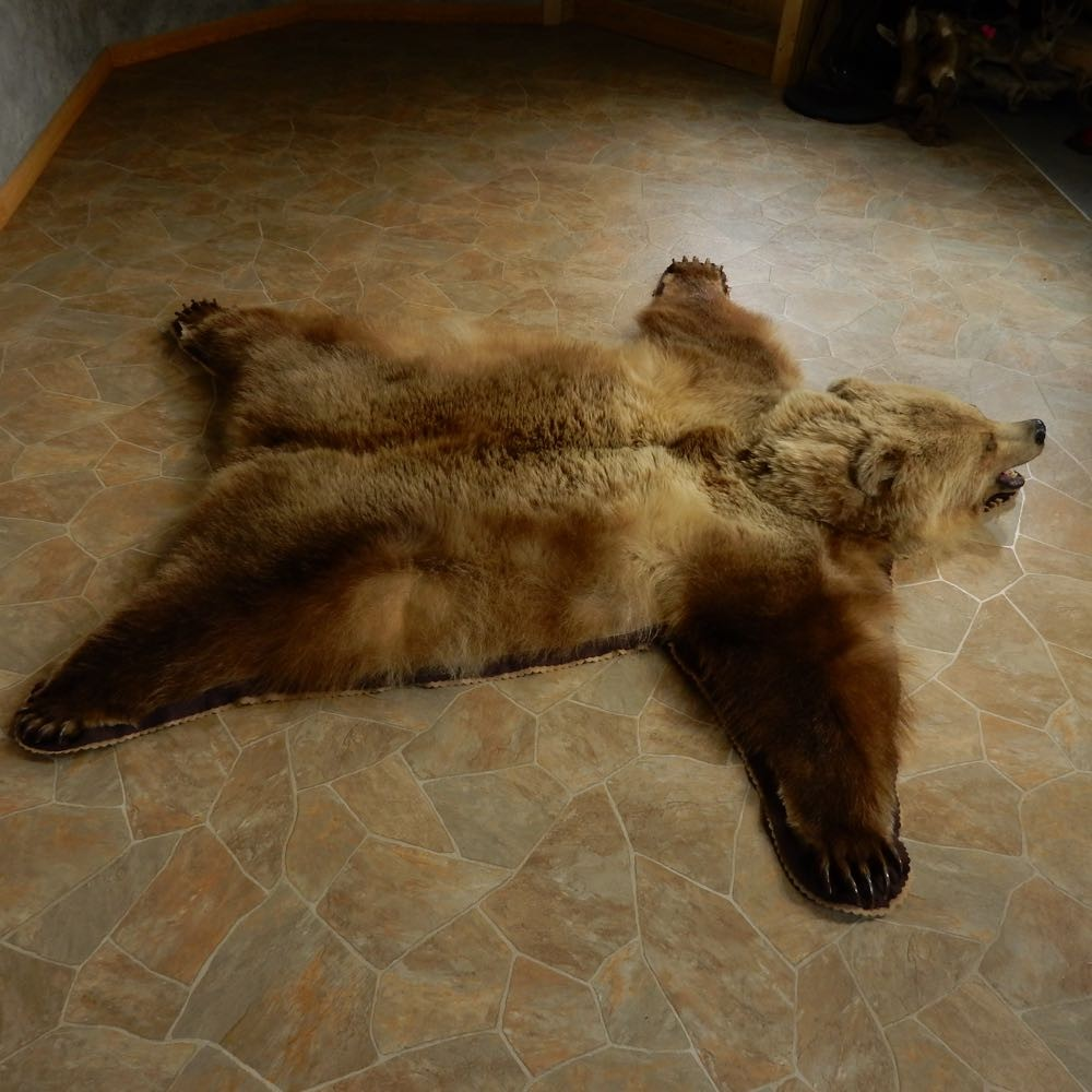 inch bl p bear foot grizzly rug