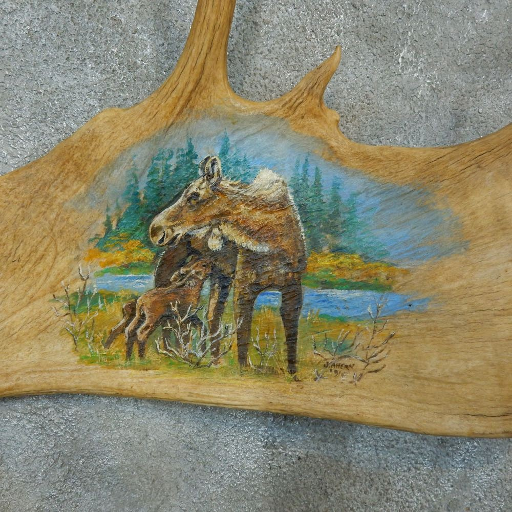 Painted Moose Antler Set Mount For Sale #15479