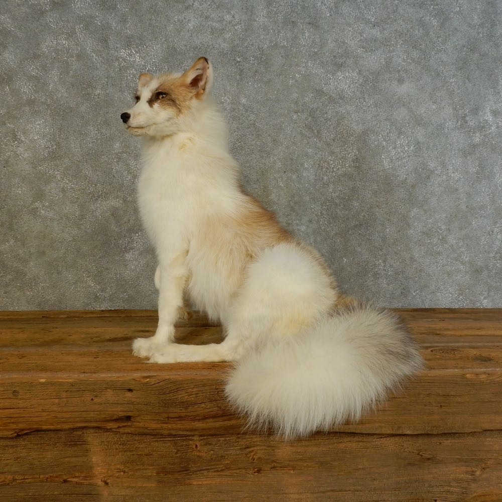 red marble fox mount for sale 16494 the taxidermy store