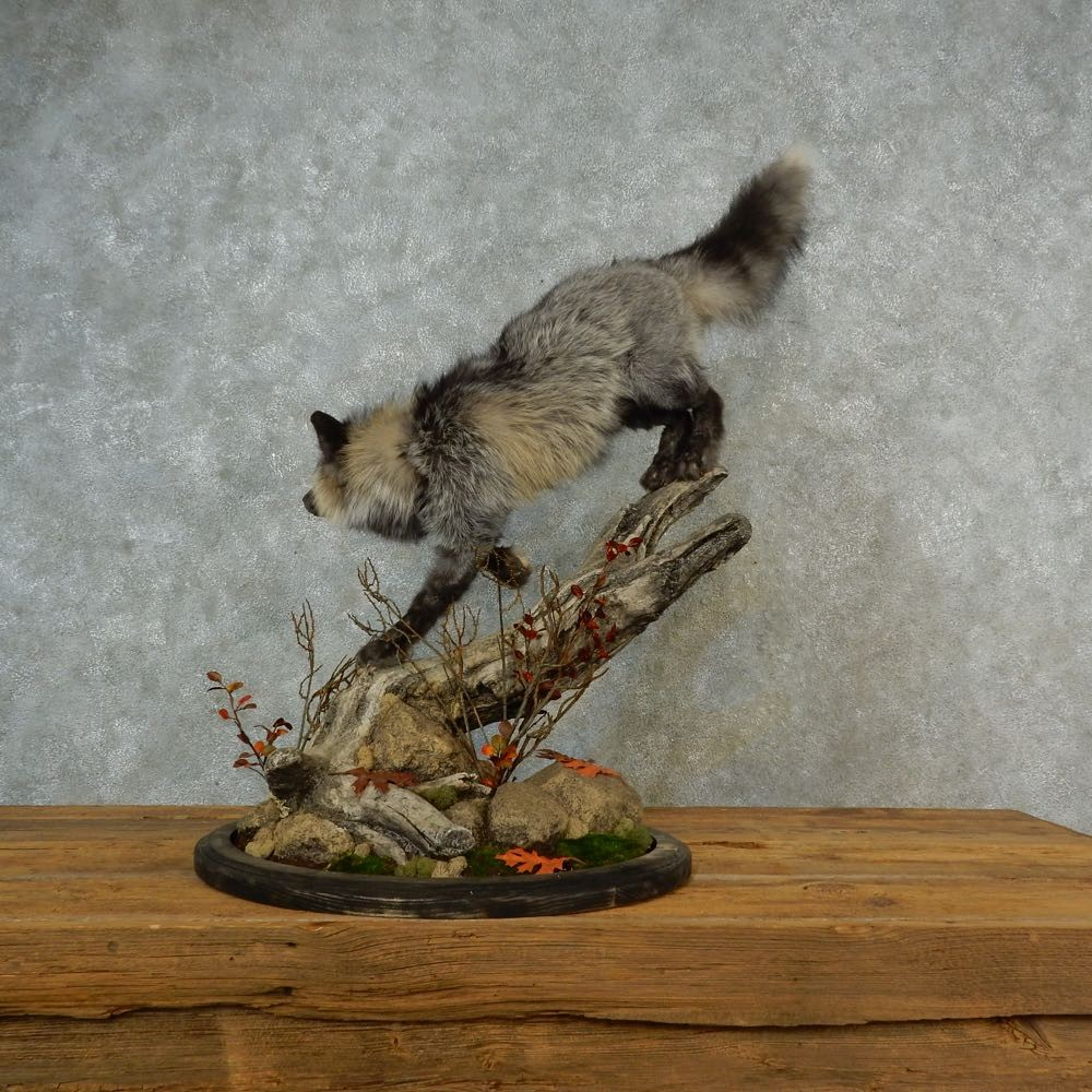 Tri-Color Cross Fox Mount For Sale #16547 - The Taxidermy ...