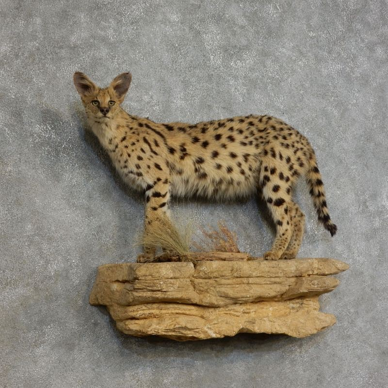 10 Exotic Pet Animals | Jiji Blog
