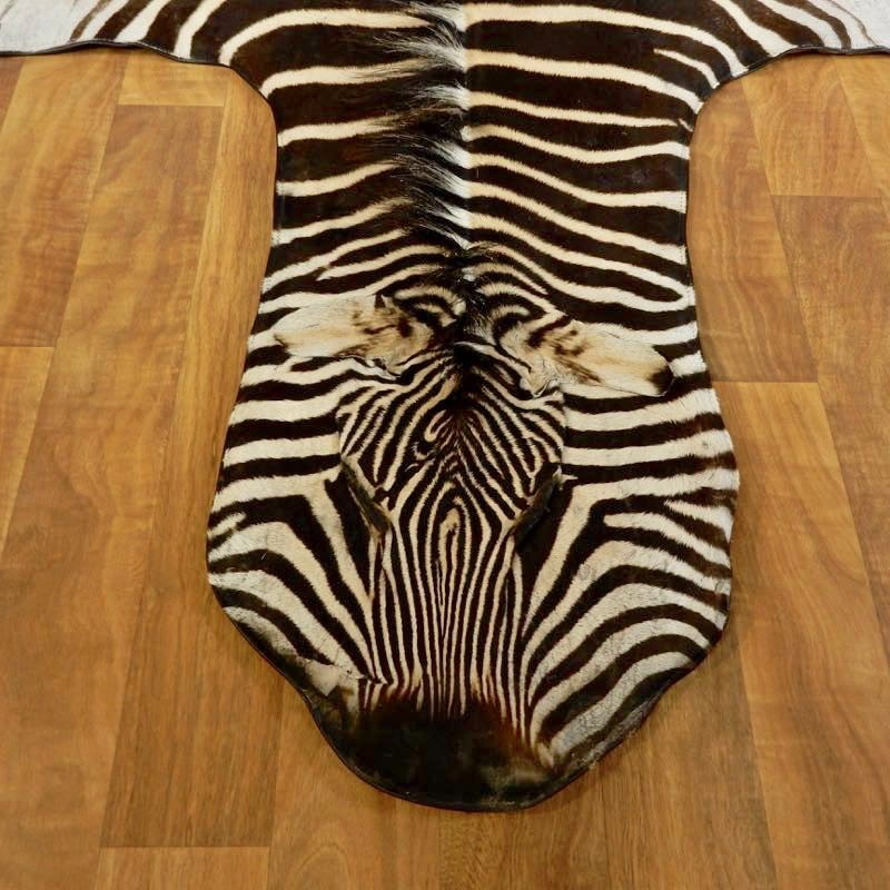 African Zebra Full Size Taxidermy Rug For Sale #17277 @ The Taxidermy Store