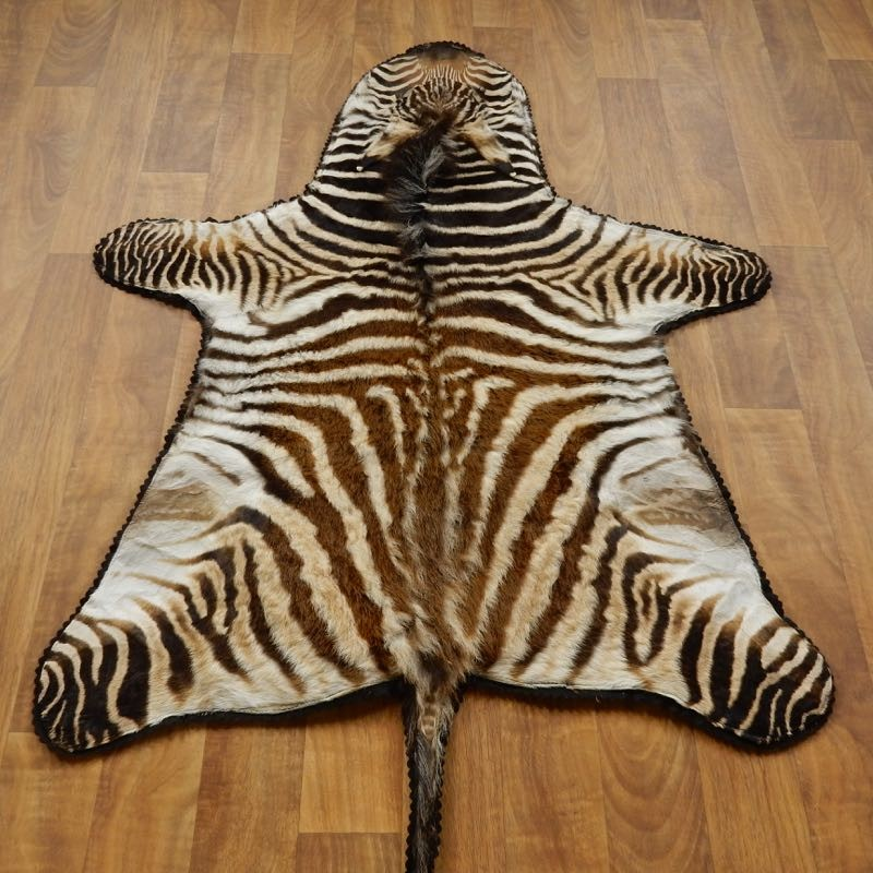 African Juvenile Zebra Rug Mount 17279 The Taxidermy Store