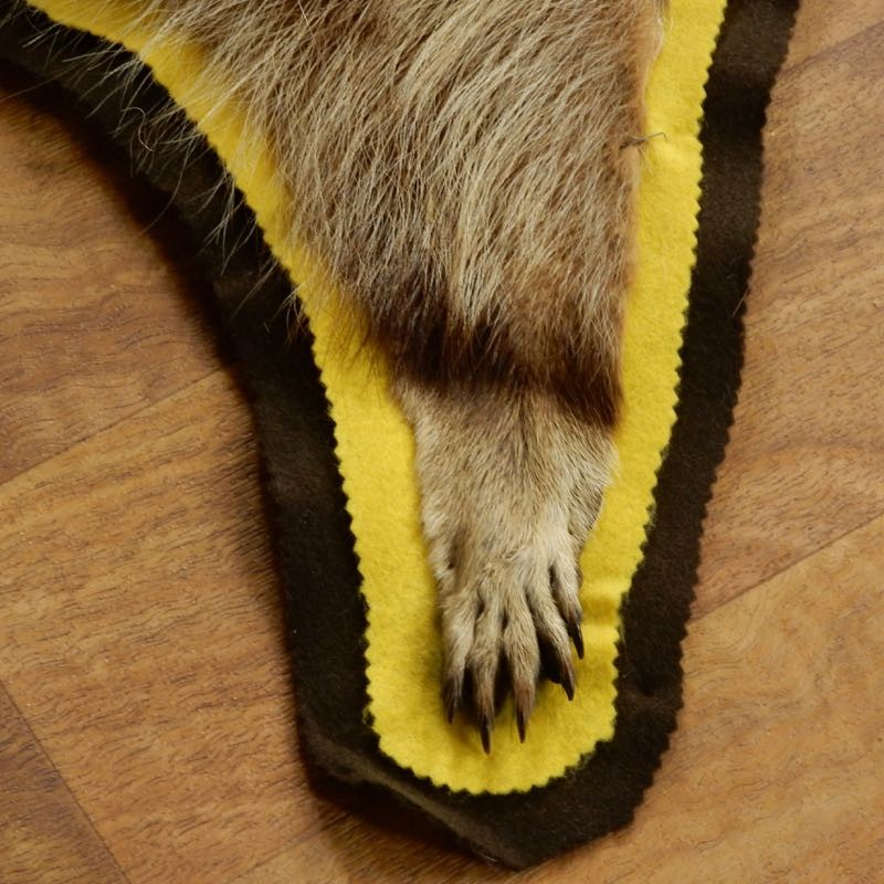 Raccoon Full-Size Rug Mount For Sale #17429