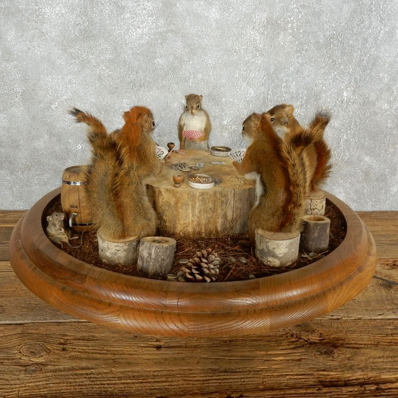 Life Size Poker squirrel Taxidermy Set For Sale #17601