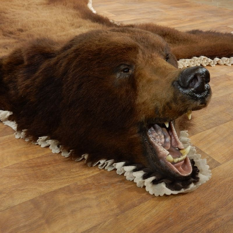 Brown Bear Taxidermy Rug With Mounted Head 17858 For Sale @ The Taxidermy  Store