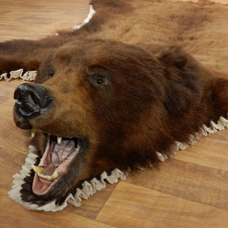 Brown Bear Taxidermy Rug With Mounted Head 17858 For The