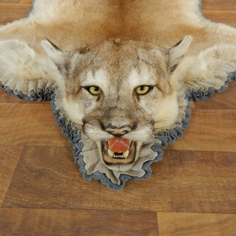 Mountain Lion Cougar Mount #17865