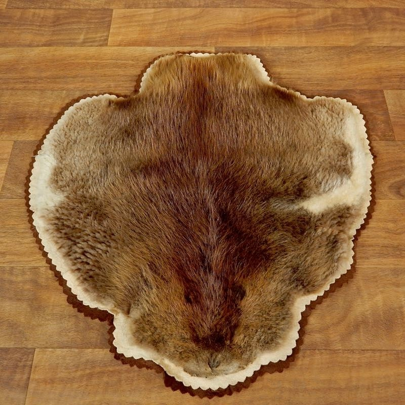 Beaver Hide Taxidermy Rug For Sale #17874