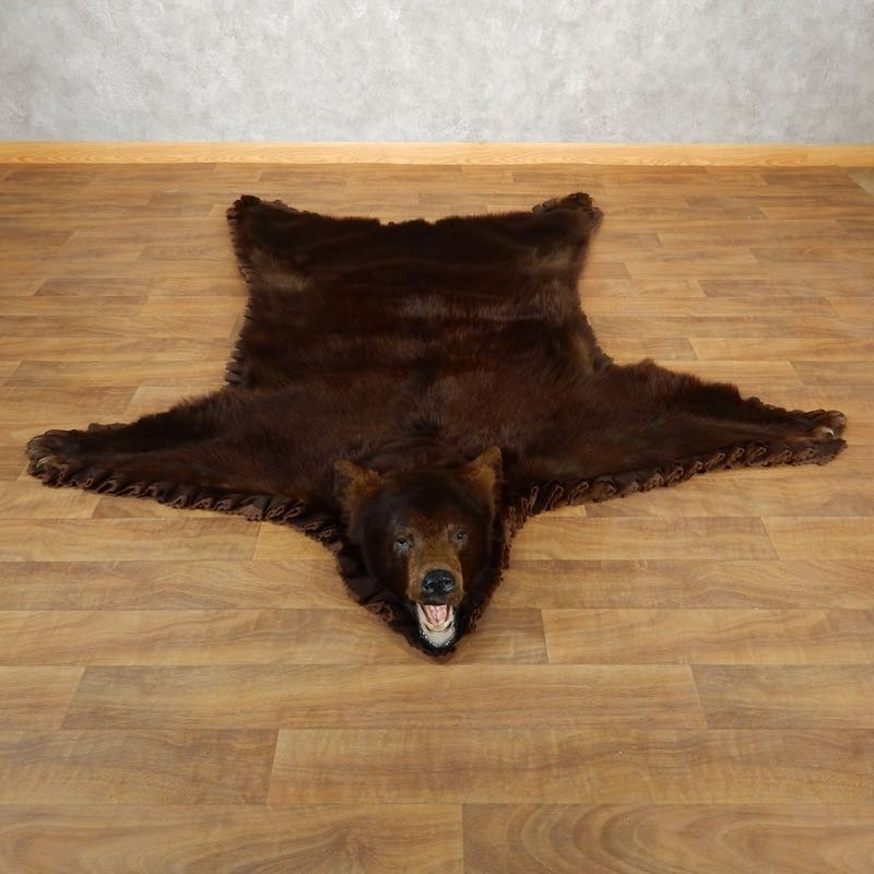 Brown Bear Taxidermy Rug With Mounted Head 17890 For The