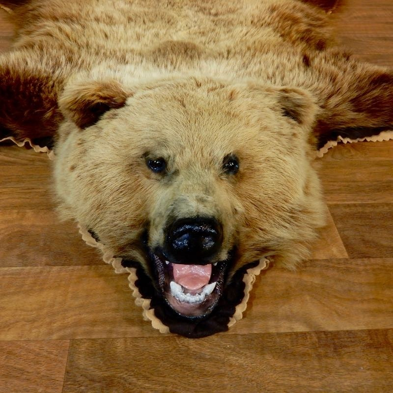 Toklat Grizzly Bear Full-Size Rug Mount For Sale #18211