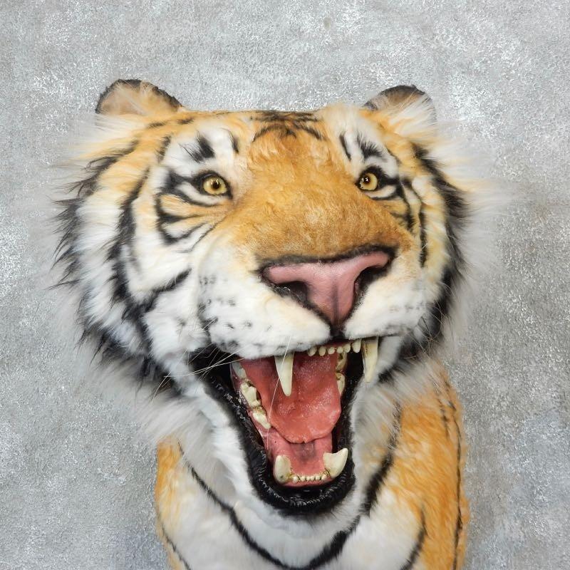 Reproduction Siberian Tiger Shoulder Mount #18293