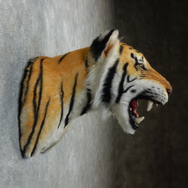 Taxidermy Tiger Rug For Sale: Reproduction Bengal Tiger Shoulder Mount #18299