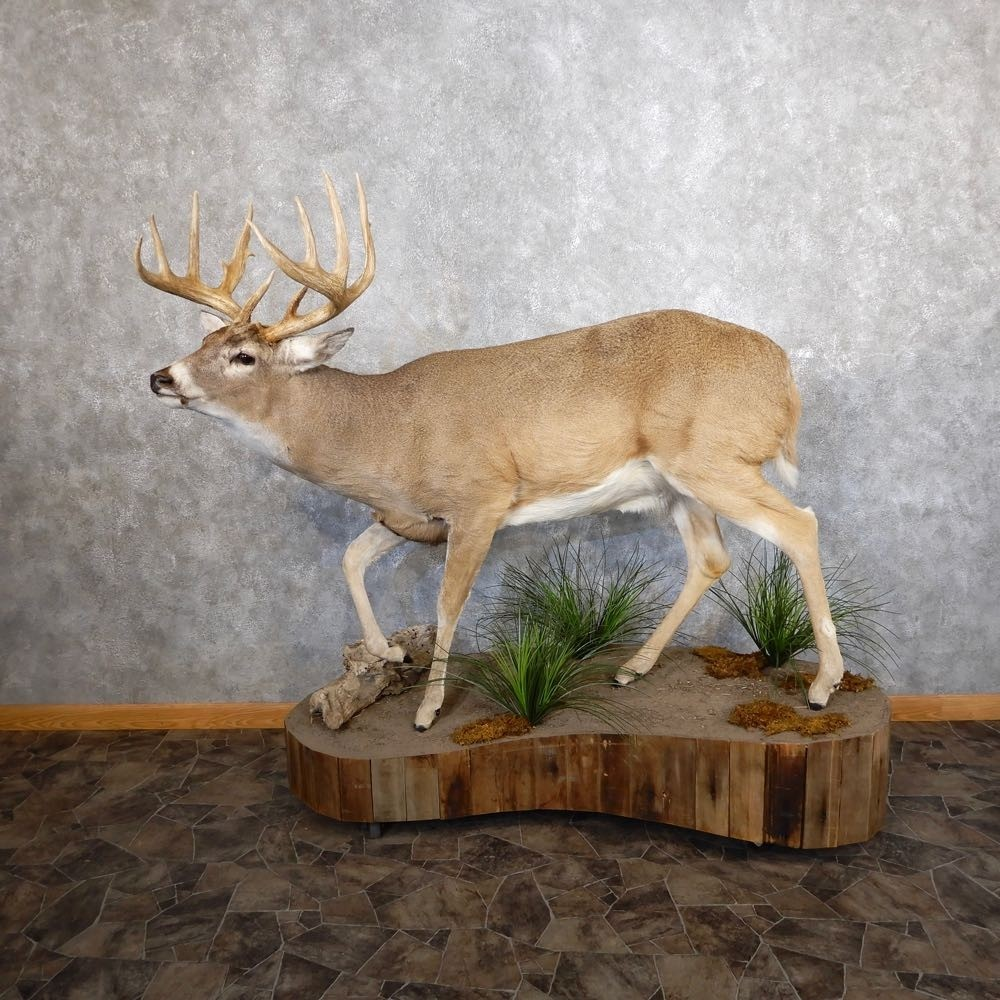 Whitetail Deer Life-Size Mount For Sale #18602