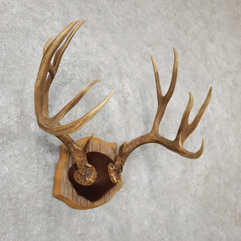 Antlers and Horns - Deer, Elk, Moose and More