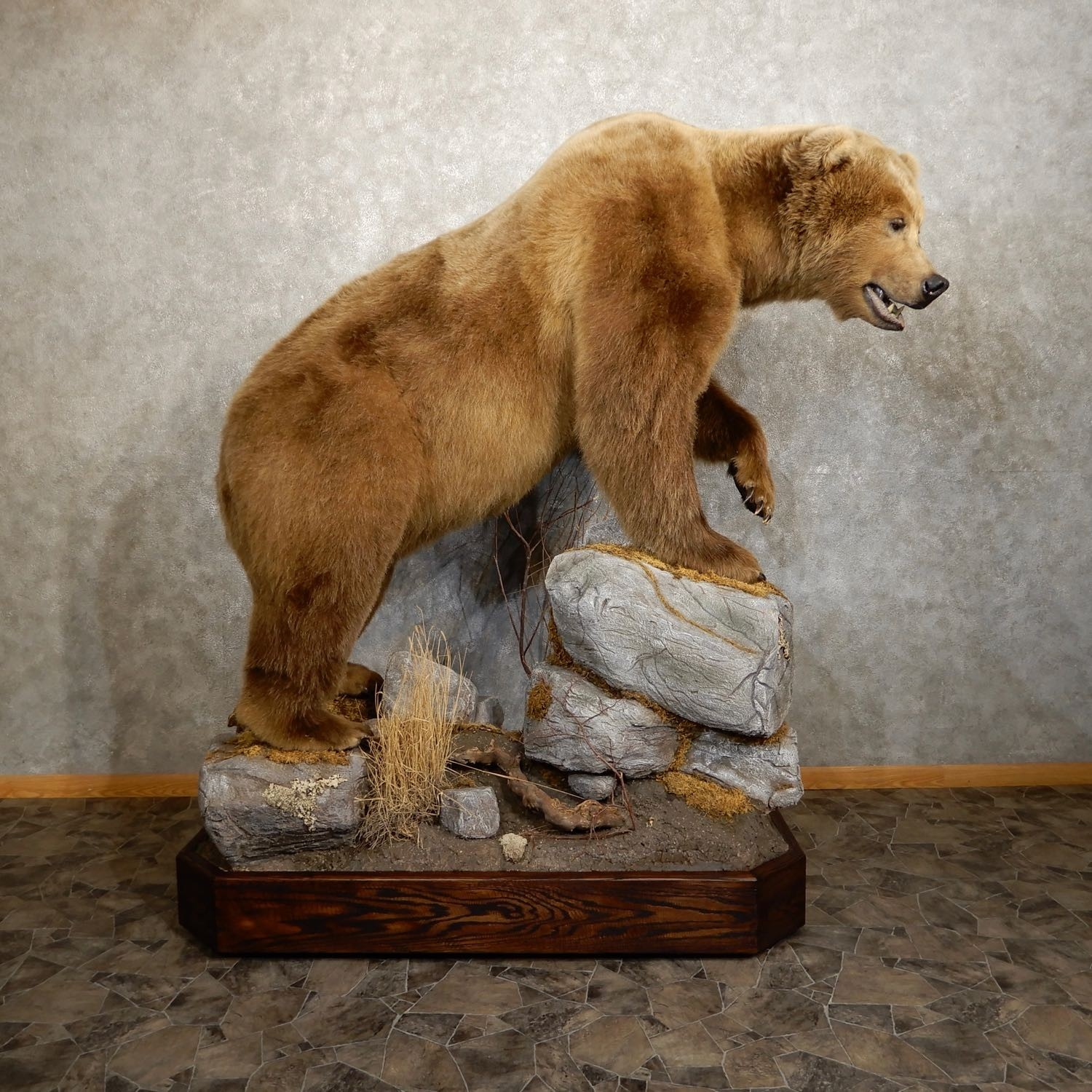 kodiak brown bear life size taxidermy mount for sale 19913 the taxidermy store. Black Bedroom Furniture Sets. Home Design Ideas
