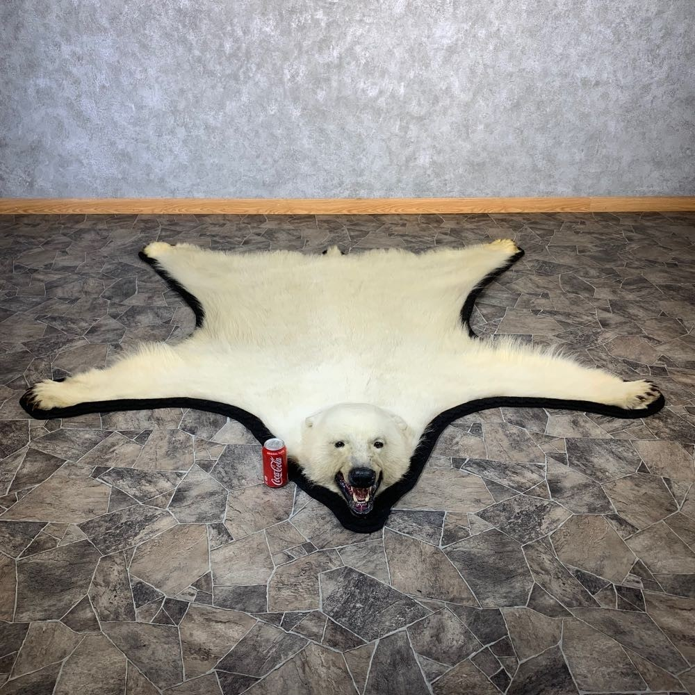 Polar Bear Taxidermy Rug For Sale #21223
