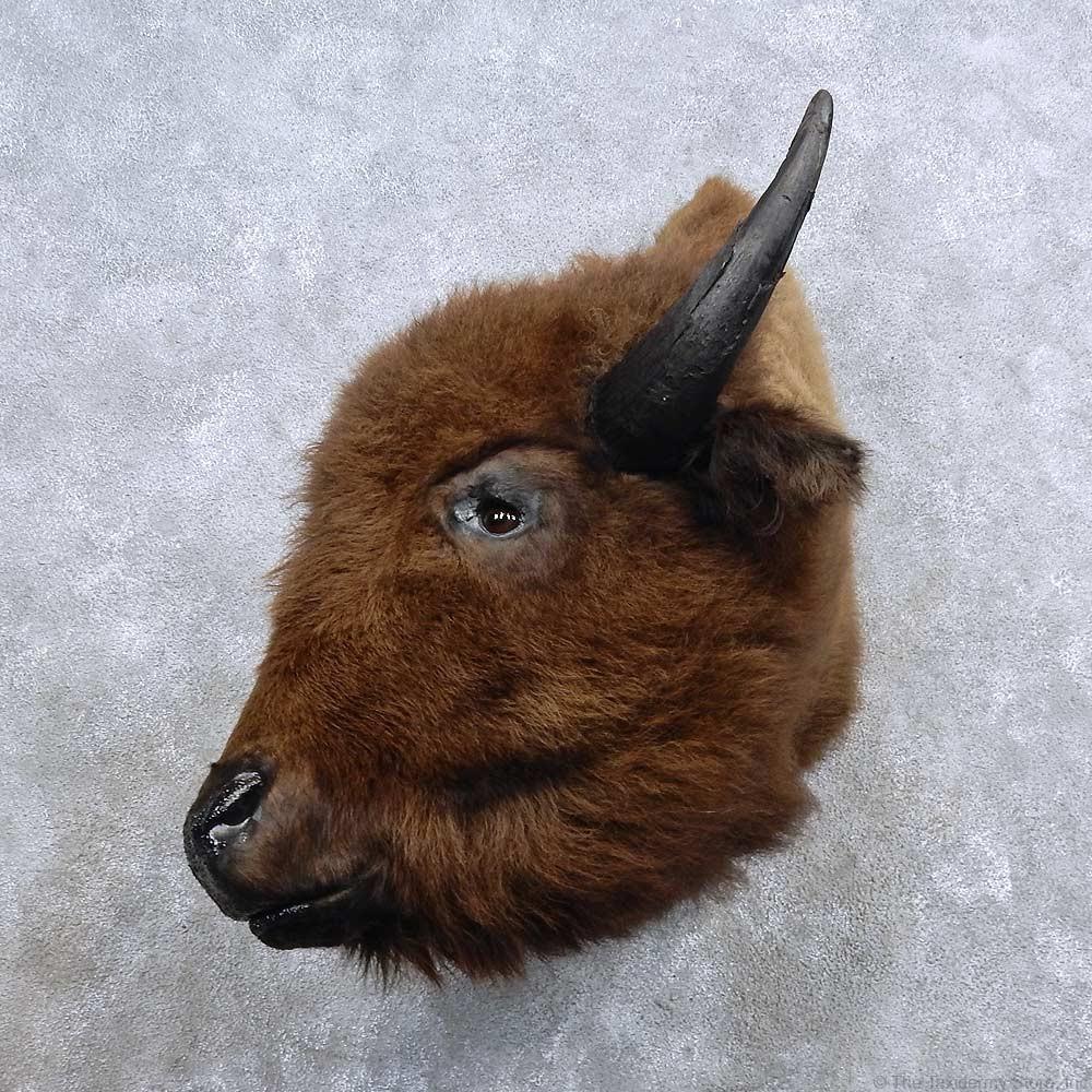 American Buffalo Bison Shoulder Mount For Sale #15686 ...