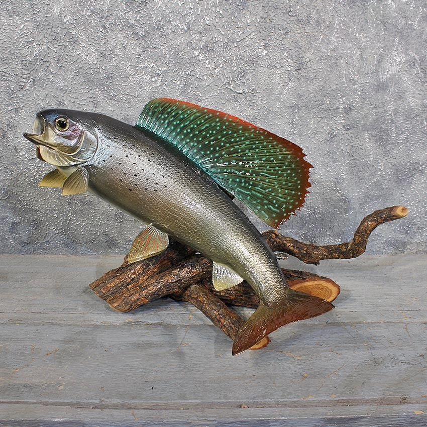 Arctic grayling fish mount 11669 the taxidermy store for How to taxidermy a fish