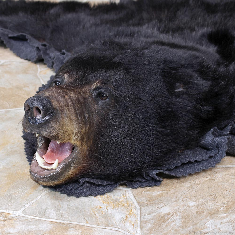 Black Bear Taxidermy Rug Mount #12341 For Sale @ The Taxidermy Store