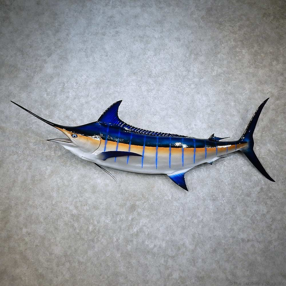 Blue Marlin Fish Mount For Sale #15847 - The Taxidermy Store