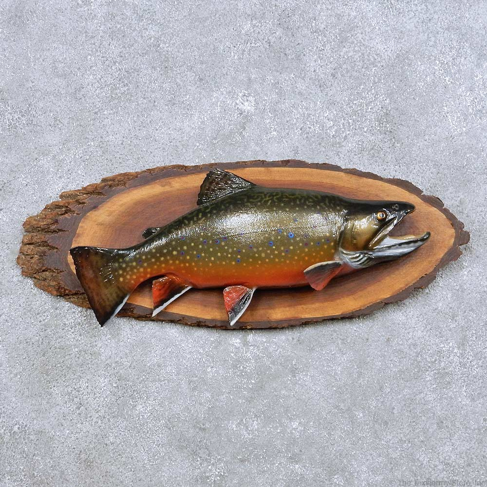 Brook Trout Fish Mount For Sale #14094 - The Taxidermy Store